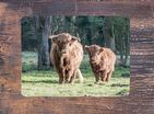 Highland Cattle Place Mats
